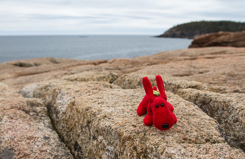 Rover, standing on the rocks that line the coast in Acadia National Park