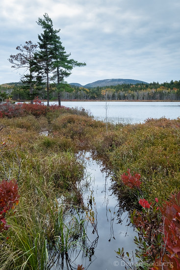 pond by a carriage road, Acadia National Park