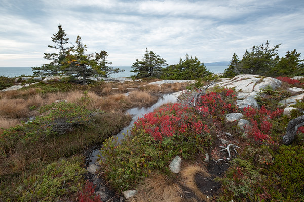color on the Schoodic Peninsula, Acadia National Park