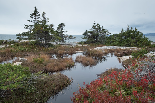 autumn color, Schoodic Peninsula