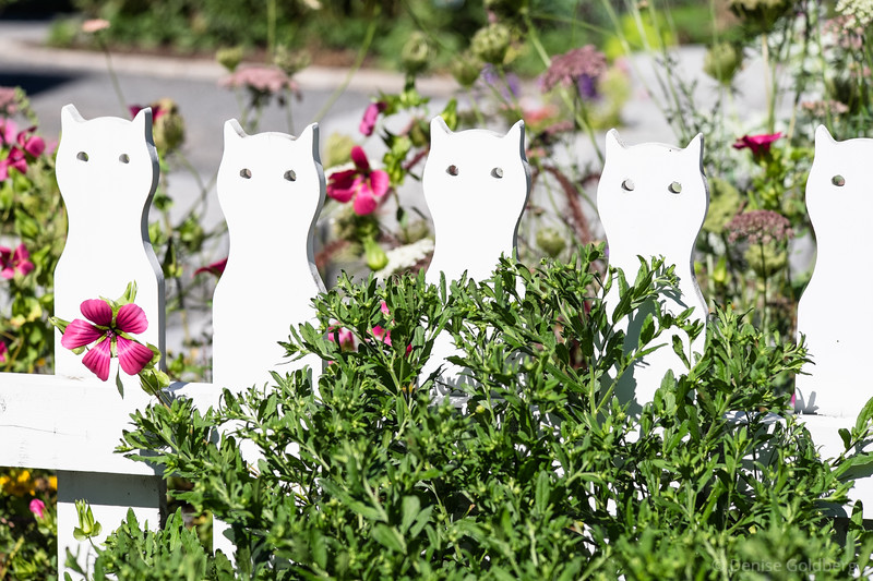 a fencepost dedicated to cats