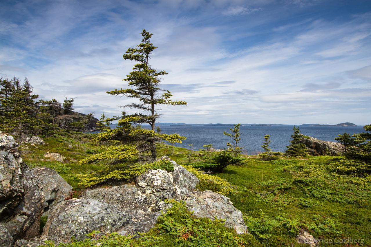 rocks, green, trees, ocean, at the tip of the Eastport Peninsula