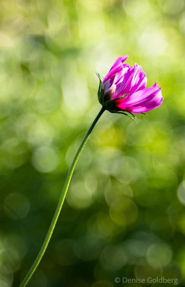 a pop of pink