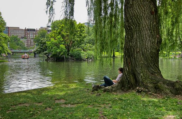 Contemplation... in Boston's Public Gardens