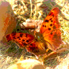 Question Mark Butterfly Print