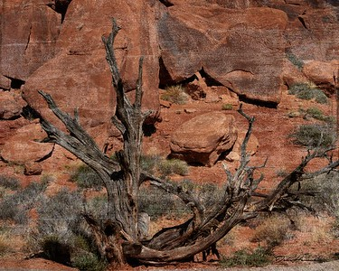 dead tree at Arches 2018 signed -7257-Edit