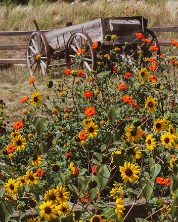 Flowers and a Wagon