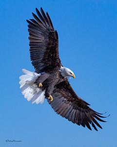 autpgr 2 adj 2 eagle iowa -0323