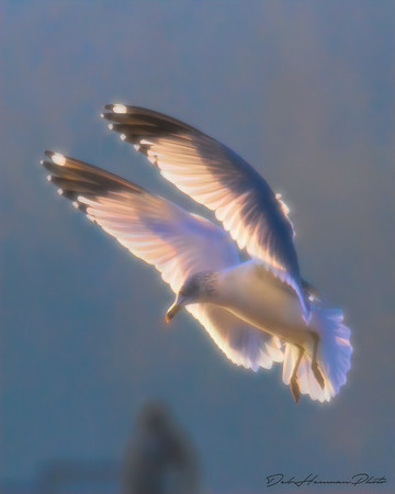 Heavenly Gull