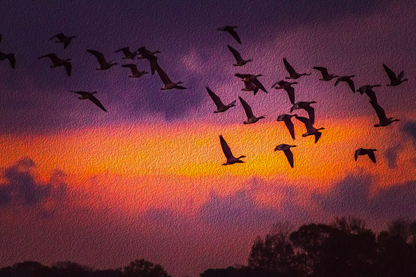 Oil Paint Sandhill Cranes at Wheeler