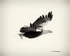 autogr yellowed bw   eagle iowa -9709