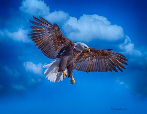 hdr composite adj 1 eagle iowa -0321
