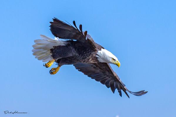 autog adj 3 eagle iowa -0324