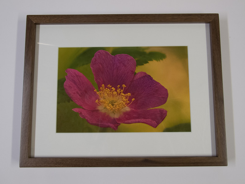 Gallery Style Walnut Frame with single mat