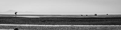 Living The Dream, Lake Clark National Park, Monochrome