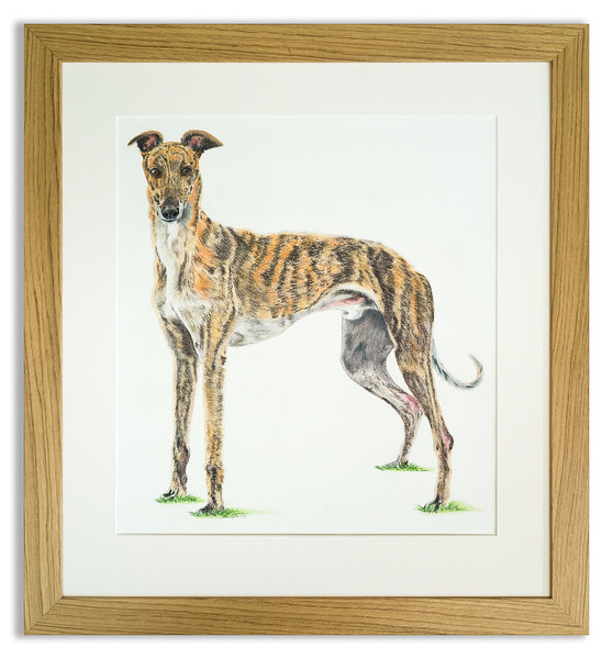 Water colour portrait of a much loved greyhound.