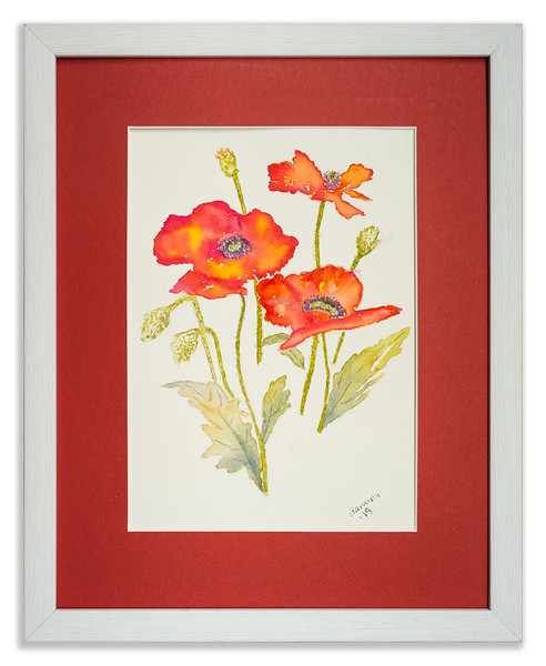 Watercolour of Poppies