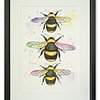 Original watercolour of bees by Natalie Croft Art