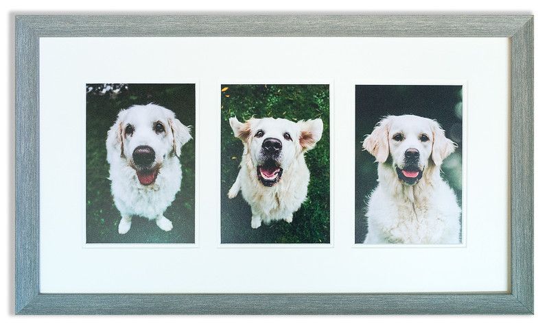 Photographs of much loved dogs