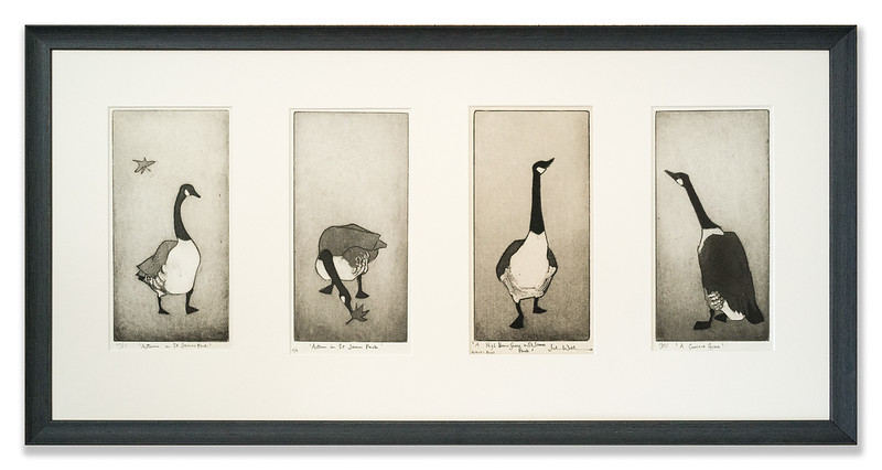 Four Goose Etchings by Julian Williams