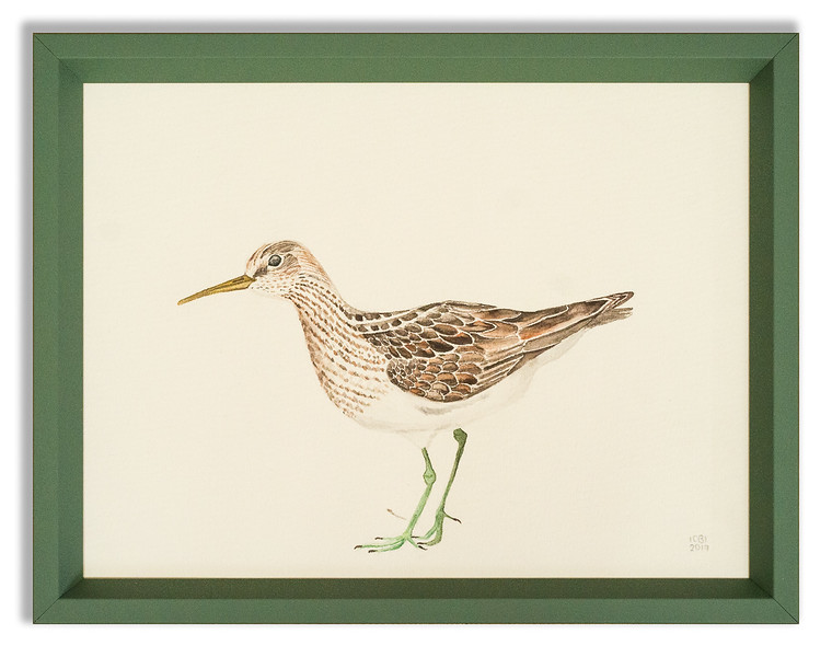 Original artwork of a sandpiper.