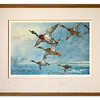 Repaired frame containing limited edition print 'Mallard in Squally Weather by Archibald Thorburn (1927)