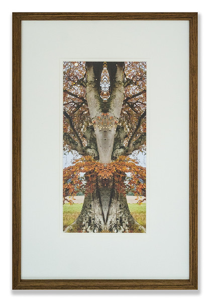 Photograph, Mirrored Autumn by Maggie Black