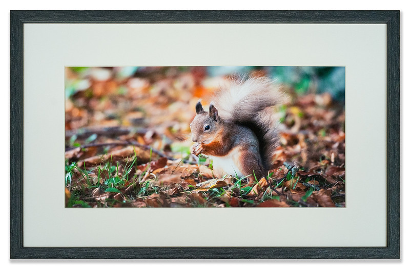 Squirrel photographed by Andre Whisken of The Mountain Ash Gallery, Scotland