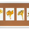 Watercolour of four Chanterelles