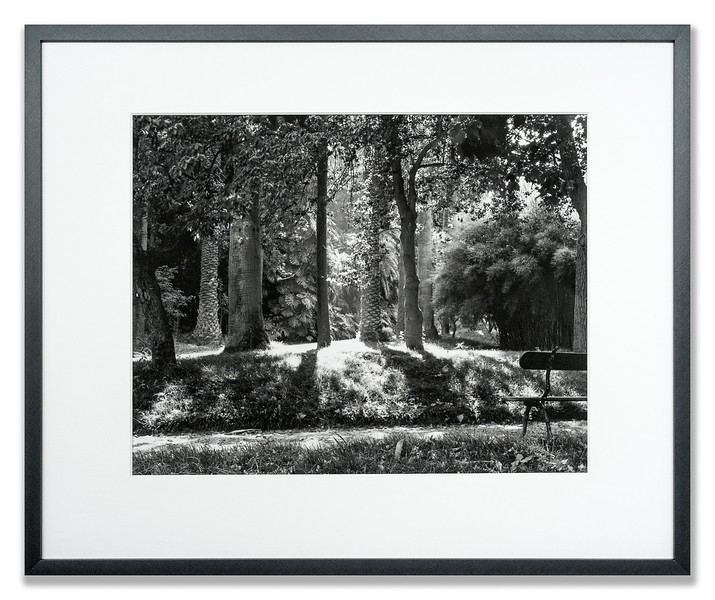 Monochrome giclee photograph of a forest scene