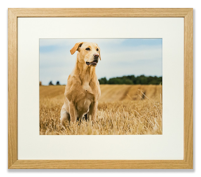 Photograph of a Dog