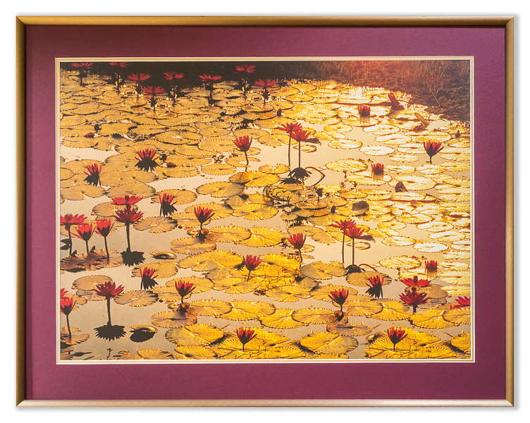 "Photo Entitled ""Lotus Pond"""