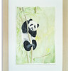 Original watercolour of a Panda