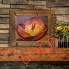 """Lenten Rose Chocolate 366"" ~ Photograph Printed Directly onto Wood"