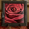 """Red Rose 50"" Photograph Printed Directly onto a Wood Panel. Enhanced with Encaustics."
