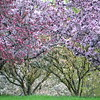 2056  Spring Trees