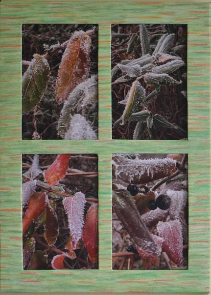 #17  Frosty Leaves