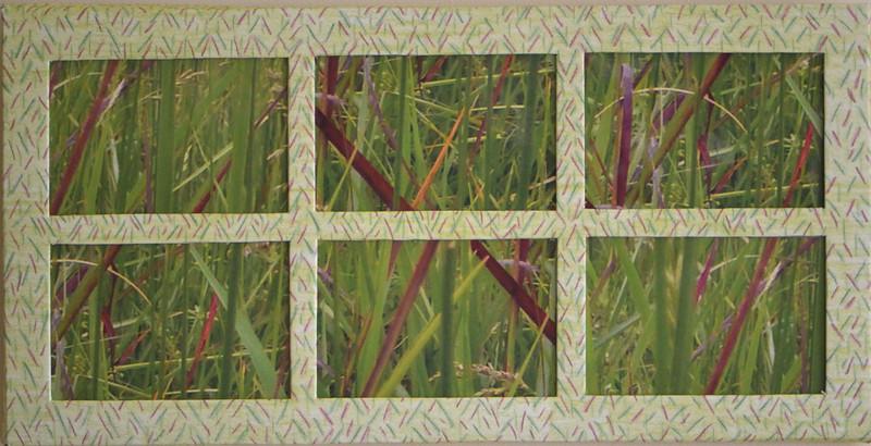 #14  Grasses