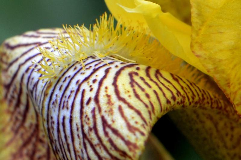 54  Iris  (left photo)