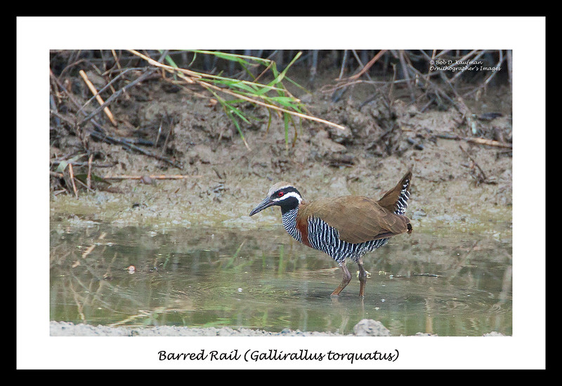 Barred Rail