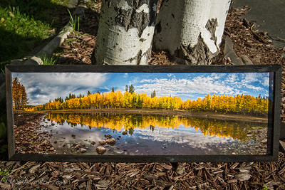 "Box Lake Aspens, 17x36"" Glass Framed"