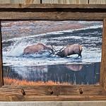 """Fighting Elk, Bullet Shells, 12x18"""""""