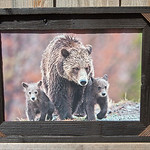 Grizzly Mom and Cubs, 12x18""