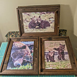 """Grizzly Bear Collection, 12x18"""""""