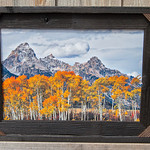 Aspens in the Tetons, 12x18""