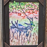 Mule Buck in Apple Orchard, 12x18""