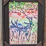 """Mule Buck in Apple Orchard, 12x18"""""""