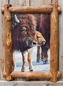 """Bison and Calf, Split Log Frame,  18x24"""""""
