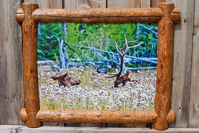 """Lazy Elk in Split Log, 18x24"""""""