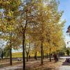 Area Arborizada em Riquewihr